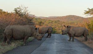 Cape Safari